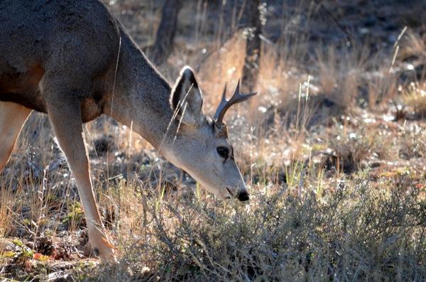 Deerhead 6